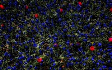 цветы, трава, бутоны