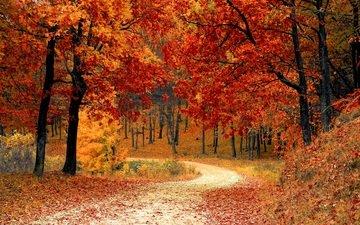 деревья, природа, лес, листья, парк, осень, тропинка, листопад