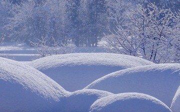 деревья, снег, природа, лес, зима, сугробы