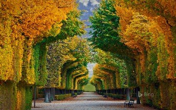 trees, nature, park, autumn, benches, alley, bing
