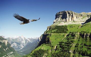 горы, полет, орел, птица, долина, испания, белоголовый орлан
