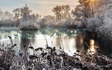 деревья, озеро, природа, лес, кусты, иней