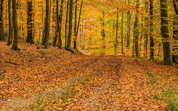 деревья, природа, лес, листья, осень, листопад