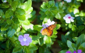цветы, листья, макро, насекомое, бабочка, крылья