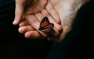 макро, насекомое, бабочка, крылья, черный фон, руки