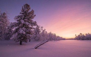 trees, snow, sunset, winter