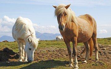 трава, животные, лошади, кони, пастбище