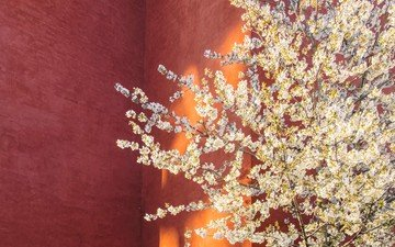 tree, flowering, wall, spring
