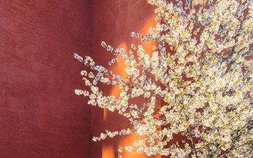 дерево, цветение, стена, весна