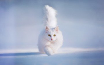 snow, winter, cat, fluffy, white