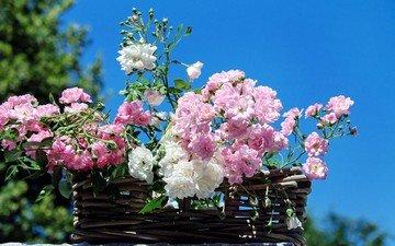 небо, цветы, розы, лепестки, корзина