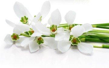 цветы, белый фон, белые, стебли, орхидеи