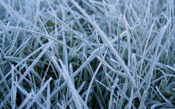 grass, nature, macro, frost