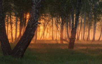 деревья, вечер, солнце, лес, закат, лучи, туман