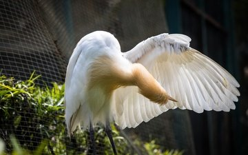 park, bird, heron, malaysia, kuala lumpur, white egret