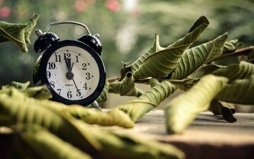 leaves, watch, time, alarm clock, dial, bokeh, ayeshadows