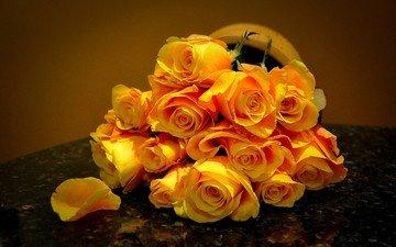 цветы, розы, лепестки, букет, жёлтые розы