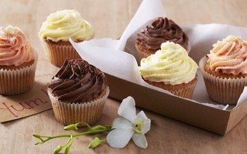 flower, sweet, dessert, cupcakes, muffins, cream