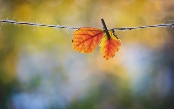 leaves, macro, autumn, rope, clothespin