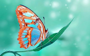 макро, насекомое, бабочка, крылья, растение, ozturk mustafa