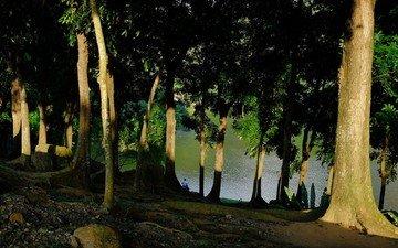 деревья, озеро, берег, стволы, мужчина, тени, солнечный свет