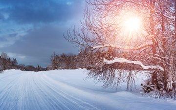дорога, деревья, снег, природа, лес, зима, анна, anna grigorjeva