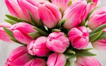 цветы, букет, тюльпаны, розовые цветы