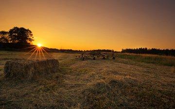 трава, солнце, закат, поле, lena held