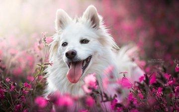 face, flowers, dog, joy, language, bokeh