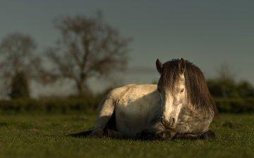 небо, лошадь, трава, природа, лето, луг, пастбище, конь, гнедой