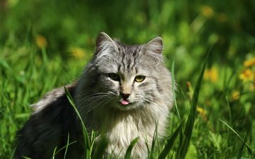 eyes, grass, cat, look, language