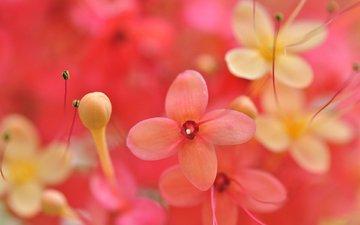 flowers, buds, macro, petals, blur