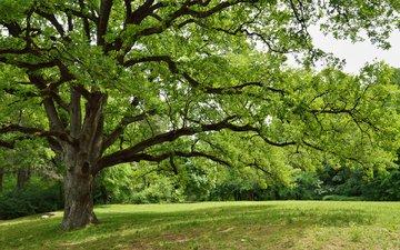природа, дерево, парк, весна
