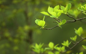 nature, leaves, macro, background, branches, spring