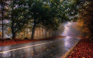 road, nature, forest, autumn, rain