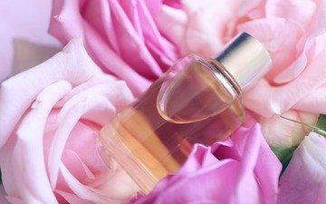 цветы, роза, лепестки, спа, мазут, духи, розовые розы, пинк, эфирные масла, parfume