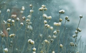 nature, plants, background, blur, stems