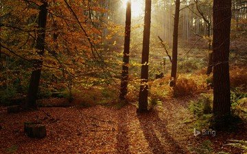 деревья, лес, листья, стволы, листва, осень