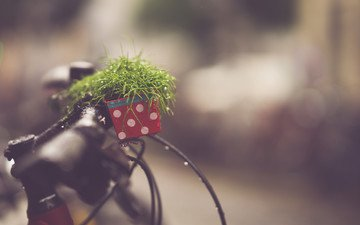 drops, blur, plant, bike, call, bokeh