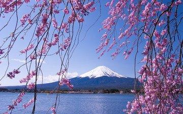цветение, море, ветки, горизонт, япония, сакура, вулкан, фудзияма