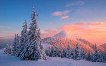 деревья, горы, снег, закат, зима, сосны, карпаты