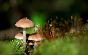 грибы, паук