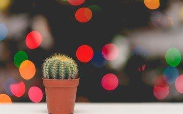 цветок, блики, колючки, кактус, боке, горшочек