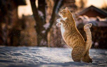 snow, winter, cat, animal