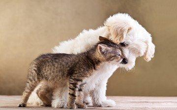 животные, кот, котенок, собака, пес, друзья