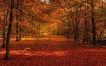 autumn, autumn forest