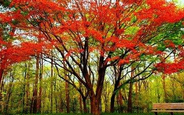 tree, autumn, bench