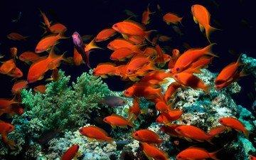 рыбки, рыбы, кораллы, водоросли, подводный мир