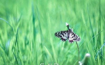 трава, насекомое, бабочка, крылья, tatyana krylova, татьяна крылова