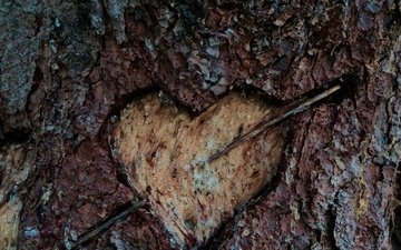 heart, tree bark